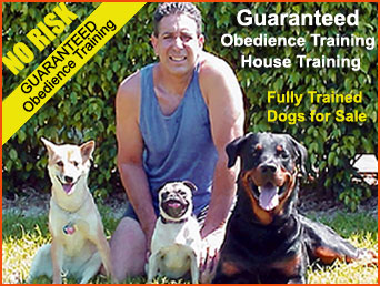 Fort Lauderdale Dog Trainer